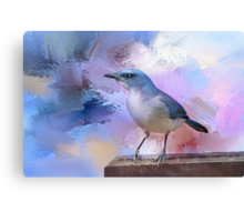 Mexican Jay Canvas Print