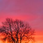Hot Pink Sunrise by Rachel Tyrrell