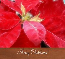 Mottled Red Poinsettia 2 Merry Christmas S1F1 by Christopher Johnson