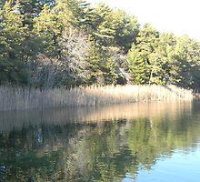 Pond Reflection by CapeCodGiftShop