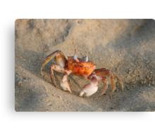 Crab on a Beach Canvas Print