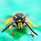 Wasp face off by missmoneypenny