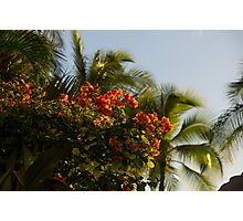 Bougainvilleas and Palm Trees Swaying in the Wind in Waikiki, Honolulu, Hawaii Photographic Print
