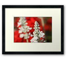 White Wonder Framed Print