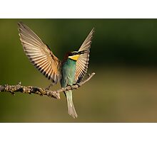 European Bee-Eater with a  Bee Photographic Print