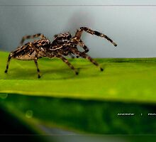 Spidy - Out for a walk by Andrew Prince