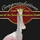 All Things Photographic Banner by imagetj