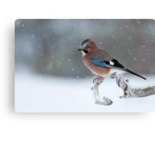 Eurasian Jay Perched on Tree Branch Canvas Print