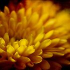 Golden Chrysanthemum by Linda  Makiej