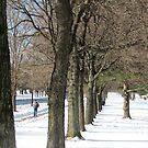 Winter walk on Pelham Parkway by Alberto  DeJesus