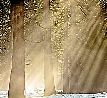 Light in the Forest by John Butler