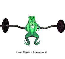 Green Poison Dart Frog Exercising by LostTemplePets