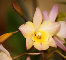 Orchid Unusual Colored Flowers by Gotcha29