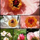 Peony Collage by Linda  Makiej