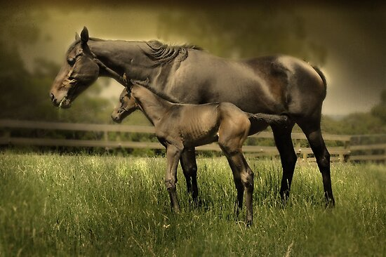 New Foal and Mare by Pilgrim