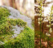 Moss rock and wild flower, Sinclair's Gully, Norton Summit, Adelaide Hills by Harvey Schiller