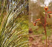 Grass tree and orchid - Sinclair's Gully, Norton Summit, Adelaide Hills by Harvey Schiller