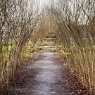 Willow Arch-Longsight. by maxblack