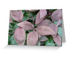 """Blush Pink Nadina"" by Carter L. Shepard Greeting Card"