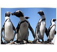 Interested Penguins Poster