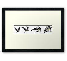 Evolution of the Bat Framed Print