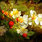 Multiflora Rose and Rose Hips by MotherNature2