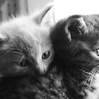 Orphan cats 2 by AroundOurWorld