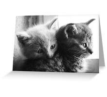 Orphan cats 2 Greeting Card