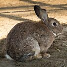 Cottontail by George Lenz