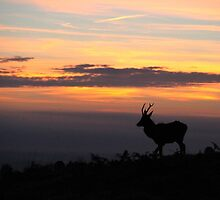 Lone stag at sunrise by shootingnelly