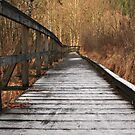 Frosted Path by Tracy Friesen