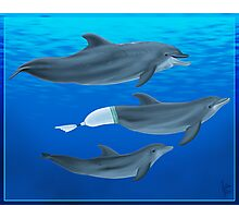 The Clearwater Dolphins Photographic Print