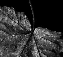 Leaf 2 by DavidWedge