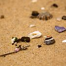Jewel In The Sand - Beachcomber Series by reflector