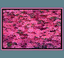 Azalea in Full Bloom  by gt6673