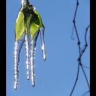 frozen leaf with elongated icicles by kaye terrelonge