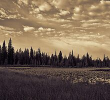 Moose Lake Shallows by Brenton Cooper