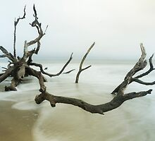 Fallen Tree on Beach by lattapictures