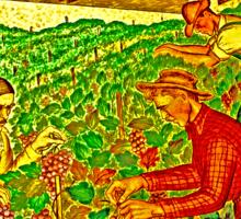 California wine grapes ready Sticker