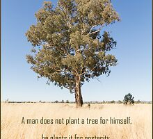 A Tree for Posterity by Linda Lees