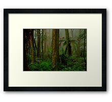 RainForrest Dreaming - Mount Wilson NSW - The HDR Experience Framed Print