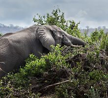 Elephant on the rampage by herbpayne