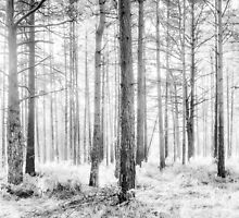 Mystical Forest Trees in Black and White by Natalie Kinnear