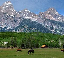 Grazing by the Tetons by Ken Smith