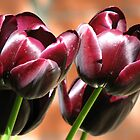 Singing of Spring - Quartet of Tulips by BlueMoonRose