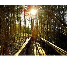Swamp Trail Photographic Print