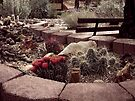 Desert Garden by Lucinda Walter