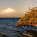 Magic Moments - Lone Tree (mangrove) by Georgie Sharp