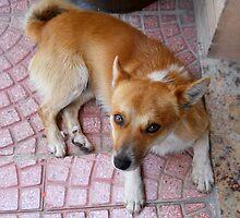 A dog 1 by Furiarossa