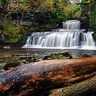 Cotter Force by Steve  Liptrot
